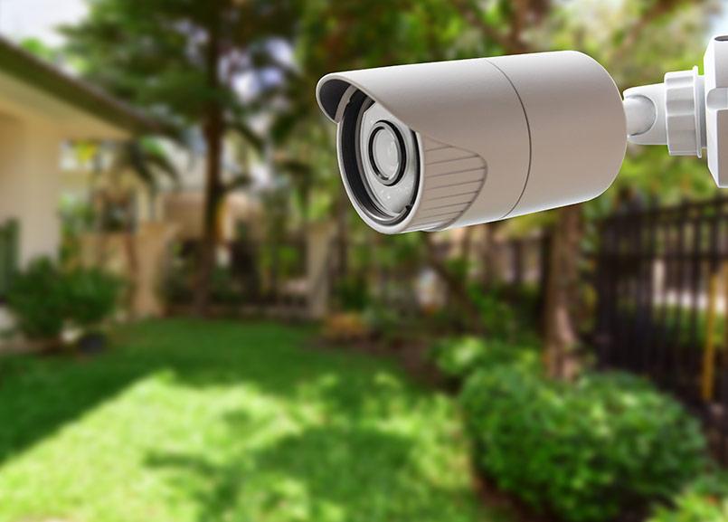 Garden under surveillance